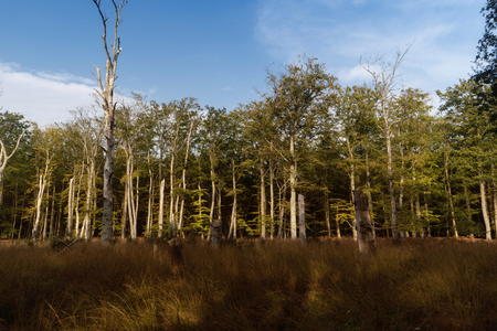 Primeval Forest on Darss