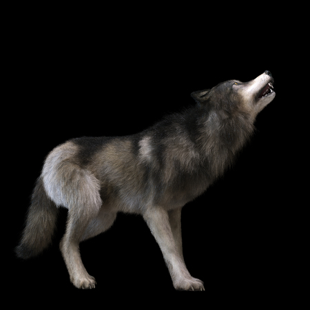 Digital 3D Illustration of a Wolf Imagens