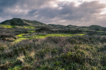 Dunes on the North Frisian Island Amrum in Germany Stockfoto
