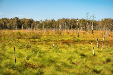 Landscape in the Dosenmoor in Schleswig-Holstein, Germany