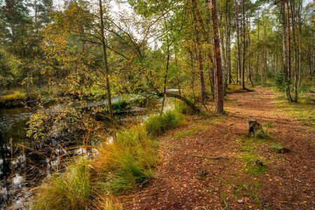 Bog Landscape in Mecklenburg-Western Pomerania in Germany Imagens