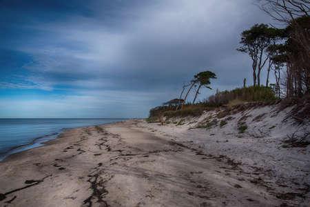 Baltic sea coast on Darss in Germany