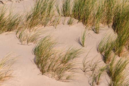 Dunes with beach grass at the Baltic Sea Standard-Bild