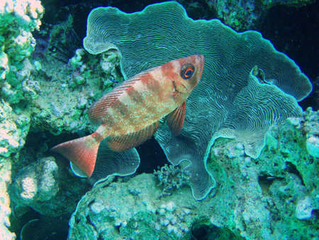 The fish and corals in the Red Sea photo