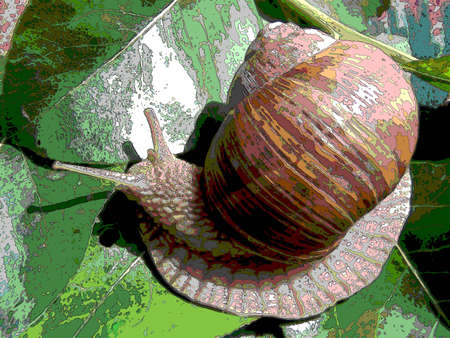 grape snail: Grape snail sur eats sur sheet on tree