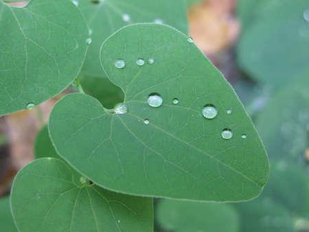 Drop of dew Фото со стока