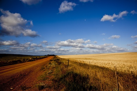 Red dirt road next to golden wheat fields photo
