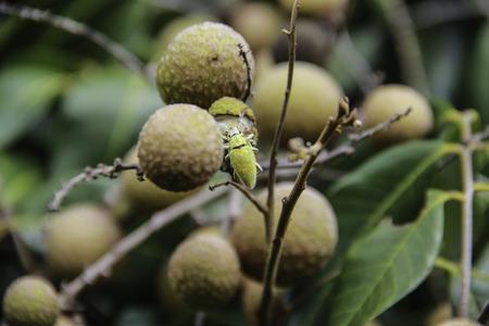 pests: Pests Stock Photo