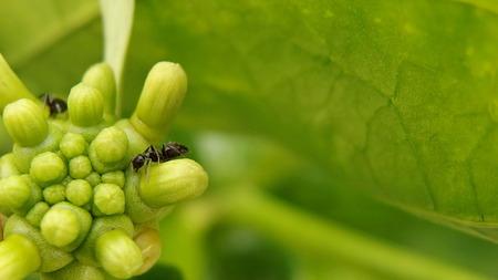 ant Stock Photo