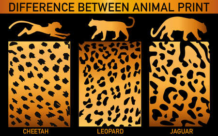reiteration: animal print. Difference between Cheetah Leopard and Jaguar Illustration