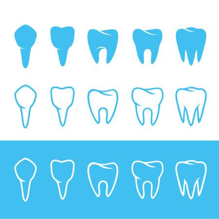 numbering: human dentition teeth, human tooth anatomy chart, diagram teeth illustration