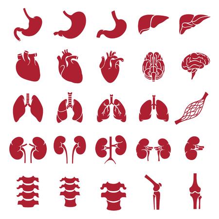 organs_red
