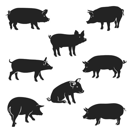 Quality black and white vector silhouettes of pigs in a walking position, isolated on white background Vettoriali