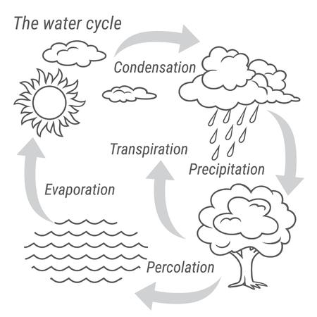 Vector schematische weergave van de waterkringloop in de natuur. Illustratie van de cyclus van het diagramwater. Fiets water in de natuur.