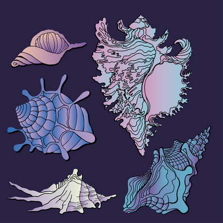 Set of various sea shells icon and starfish silhouettes