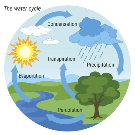 Representación esquemática vectorial del ciclo del agua en la naturaleza. Ilustración del diagrama del ciclo del agua. Ciclo de agua en entorno natural. Ilustración de vector