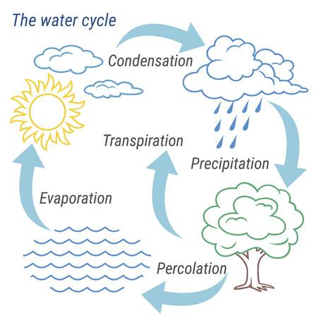 Rappresentazione schematica vettoriale del ciclo dell'acqua in natura. Illustrazione del ciclo dell'acqua del diagramma. Ciclo dell'acqua nell'ambiente naturale. Archivio Fotografico - 96615787