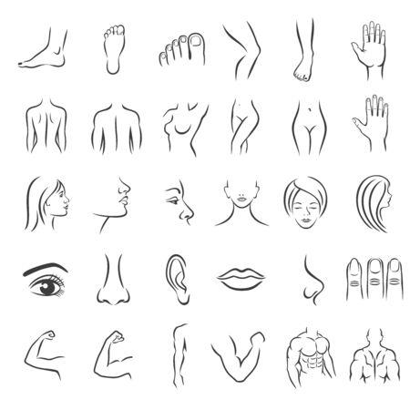 Human body parts. Icons plastic face surgery. Medical vector icons. Body sculpting system. Archivio Fotografico - 131423809