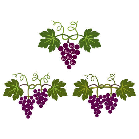 Grapes decorative pattern for wine design concept, bar menu, juice drinks, fruit juices, healthy vegan food, viticulture, wine or juice label, grape seed oil on white background. Vector illustration. Banco de Imagens - 155786411
