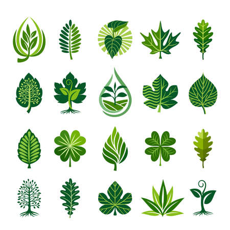 Green decorative leaf icons set. Various shapes of green leaves of trees, plants. Elements for organic, bio  landscape business, agriculture, care about the environment. Vector illustration. Ilustração