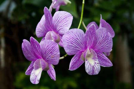 jardines con flores: hermoso jardín de flores