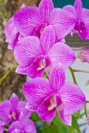 vanda: Purple orchid Stock Photo