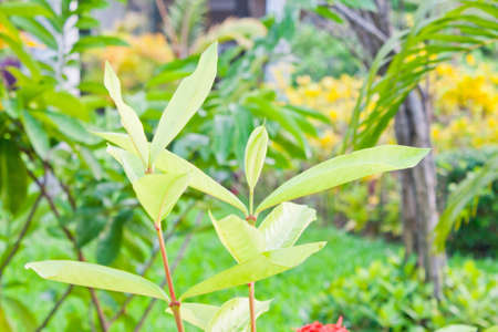 Young leaves in the garden photo