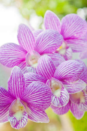 Colorful orchid in garden photo