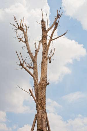 Dry tree and sky photo