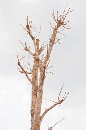 Dry tree photo