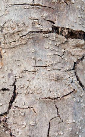 Background texture dry tree photo