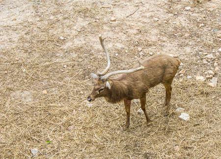 jousting: Deer in the zoo Stock Photo