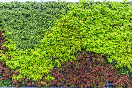 green plants: Green Wall