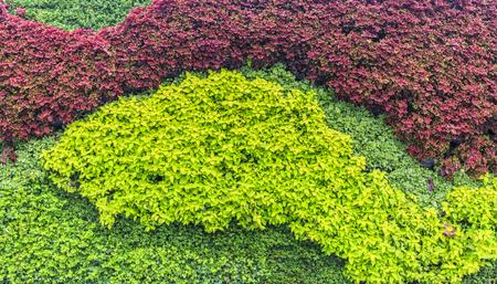 green plants: Green walls