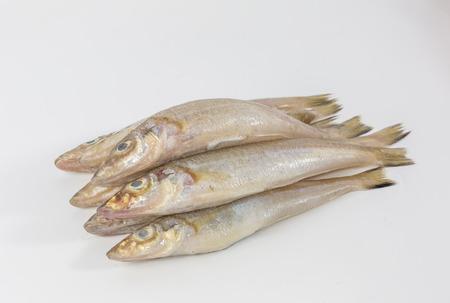 sardinas: Sardines