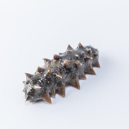 elongacion: Pepino de mar