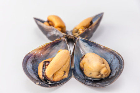clam: Close up to clam
