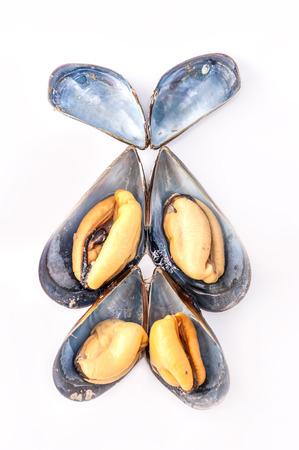 close up: Close up to clam