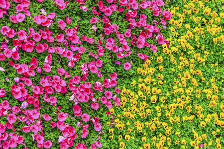 attribute: Flower background wall