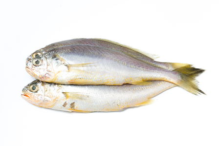 Three fresh fishes Stock Photo