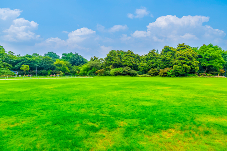 Park lawn and green forest Stock Photo