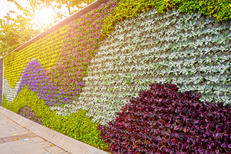 Flower plant wall