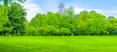 Landscape view of greenery lawn under the blue sky