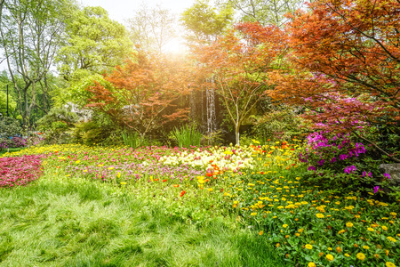 Landscape view of a park with trees and plants Stock Photo
