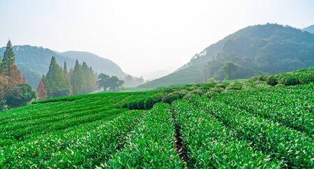 Tea Town Base Scenery