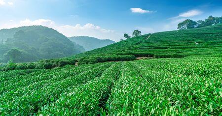 Photo of Hangzhou Longjing Tea Township Base