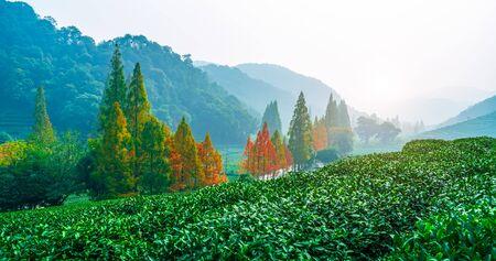 Hangzhou Longjing Tea Township Scenery