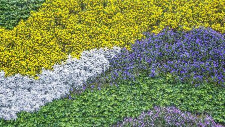 Plant landscape decorative wall 版權商用圖片