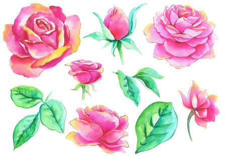 Ink, watercolor drawing: Roses Foto de archivo - 111453220