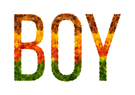 Boy word is written with leaves white isolated background, banner for printing, creative illustration boy colored leaves.